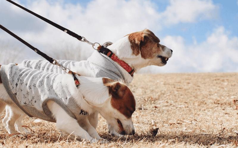 犬に洋服を着せる意味やメリットとは?