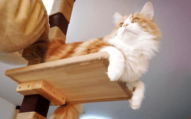 猫 キャットタワー