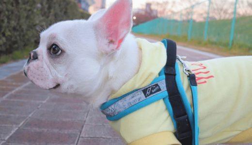 犬用ハーネスのおしゃれで可愛いおすすめ10選!人気の理由は抜けにくいから?