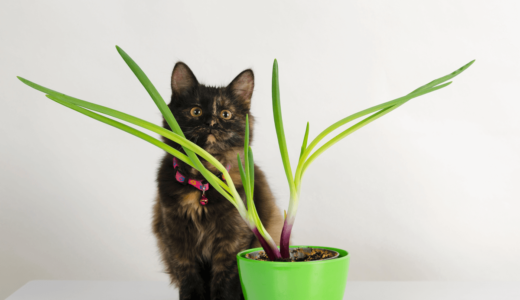 猫にネギはNG!日々における注意点と万が一の対処法