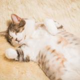 千葉県の猫カフェおすすめ7選!各店の特徴や気になる料金は?
