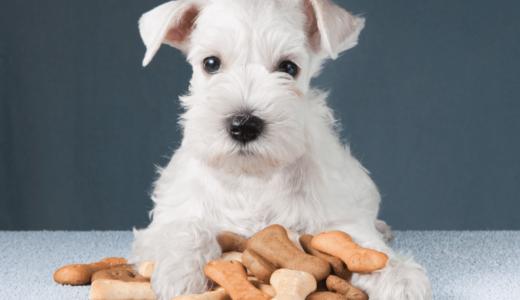 小型犬のドッグフード9選!与える量を把握して愛犬に食事を楽しんでもらおう