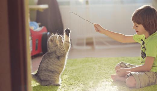 ネコじゃらしで遊ばせるメリットとは?手作りする際の注意点や遊ぶコツについて