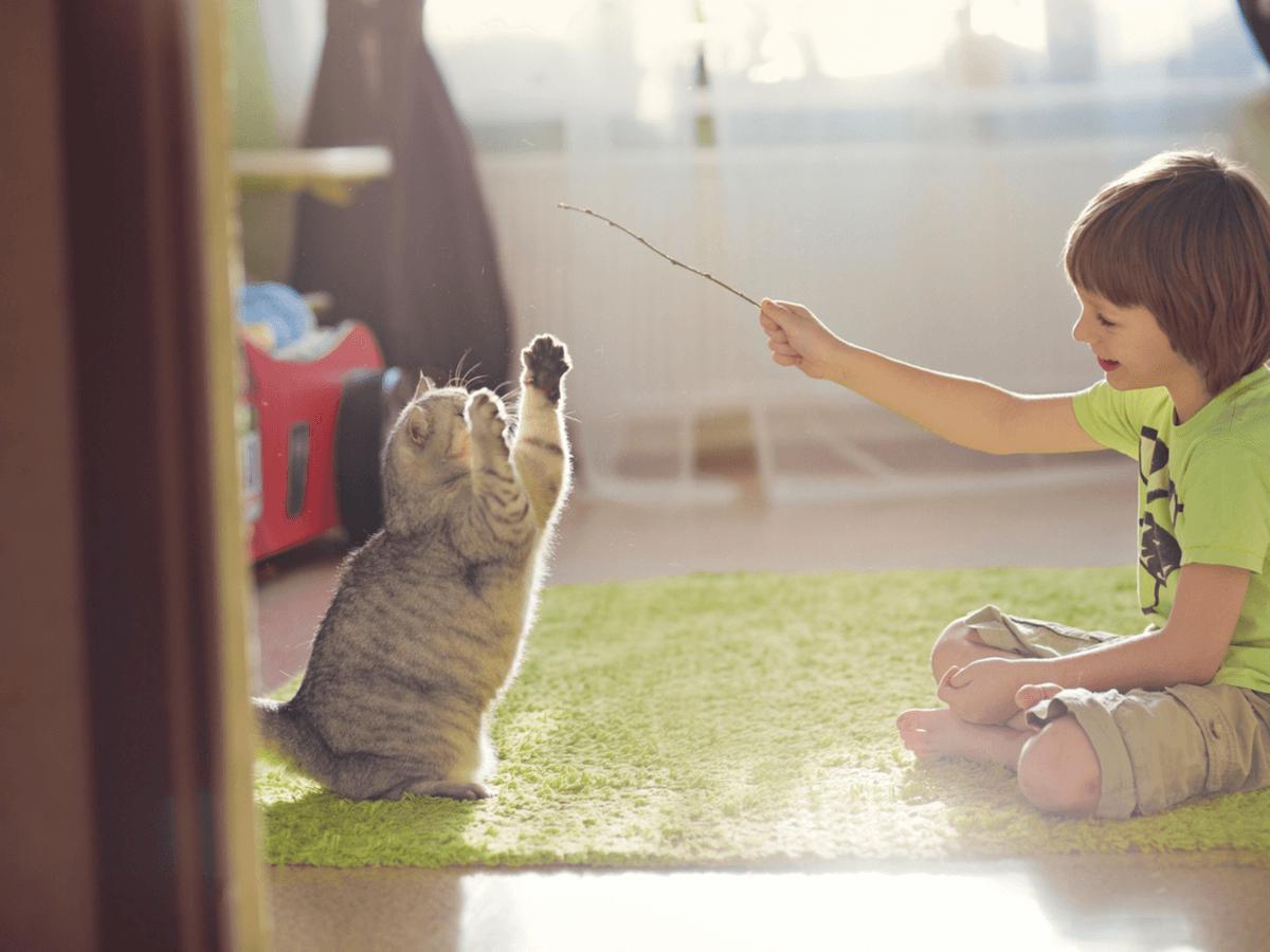 ネコじゃらしで遊ばせるメリットとは?手作りする際の3つの注意点や遊ぶコツ5つもご紹介