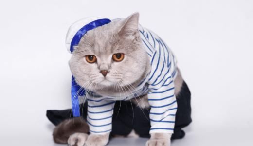 猫用の服を着せるときの注意点3つ!作り方や実用服などためになる情報をご紹介