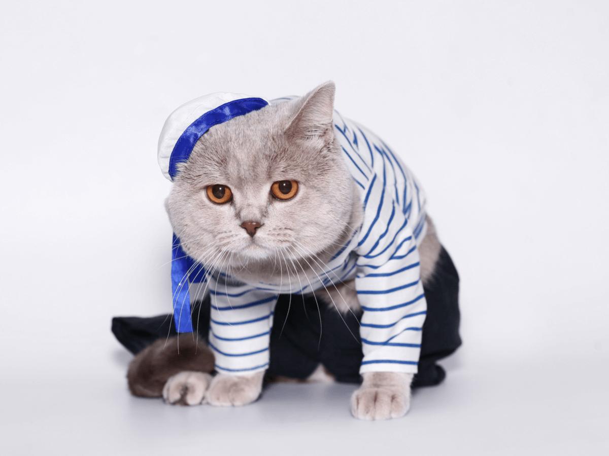 猫用の服を着せるときの注意点3つ!作り方や可愛いだけじゃない実用服も