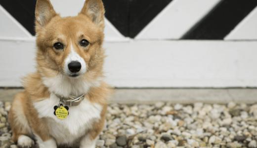 犬に迷子札は必需品?!選び方のコツや長く愛用できるおすすめ商品をご紹介