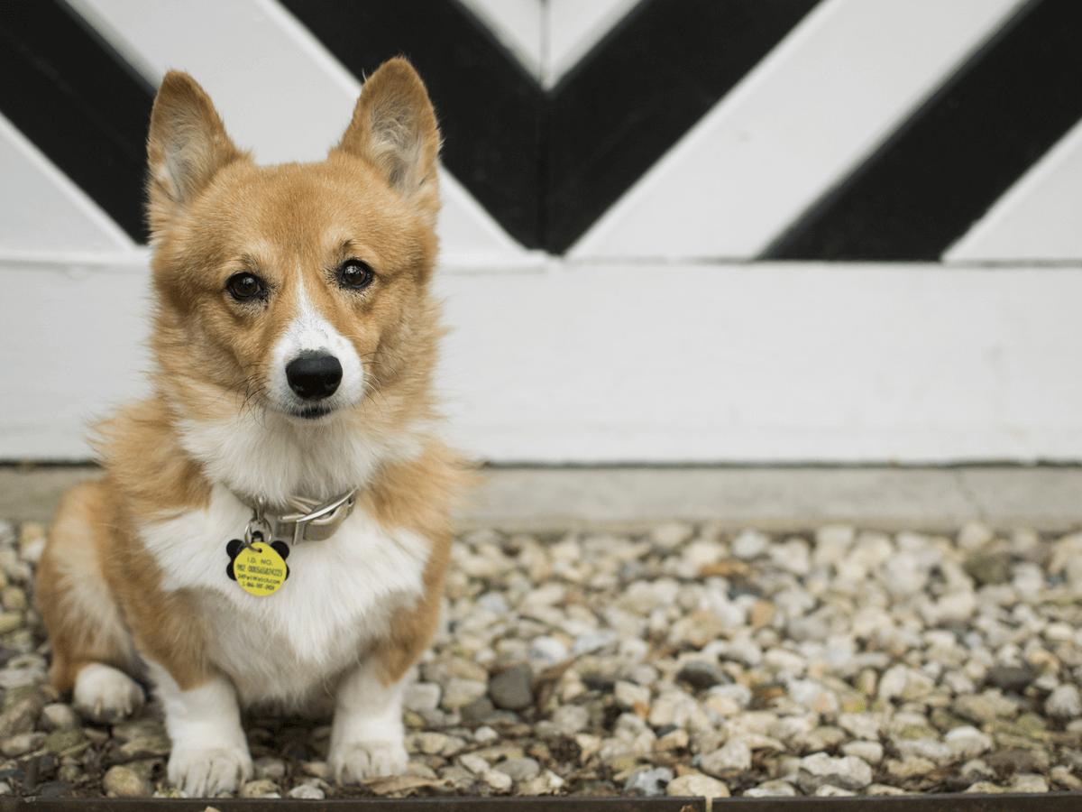 犬に迷子札は必需品?!選び方のコツや長く愛用できる迷子札をご紹介