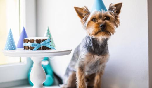 大阪にある犬用ケーキ販売店7選!ペットと一緒に思い出に残る記念日にしよう