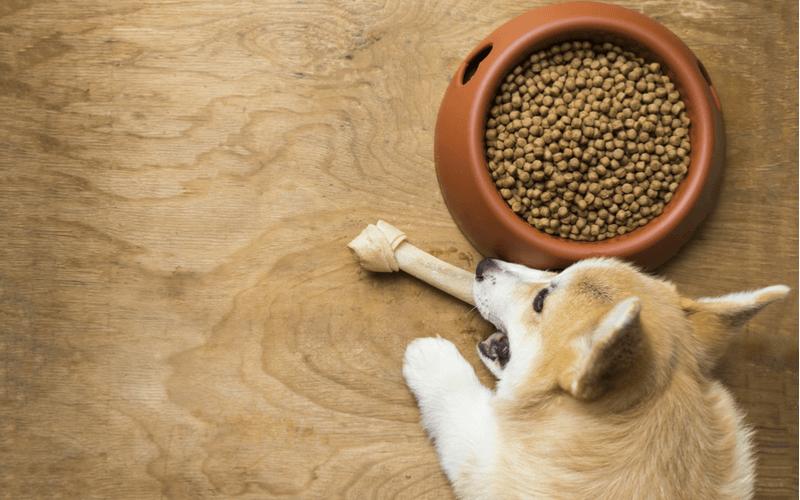 エネルギー不足に気を付けよう!中型犬の特徴と人気のドッグフード