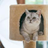 神奈川でおすすめの猫カフェ8選!里親になれる店も紹介
