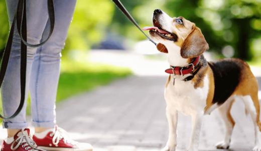犬のリードおすすめ10種類!長さ・素材別の特徴とおしゃれで伸縮性のあるもの大公開