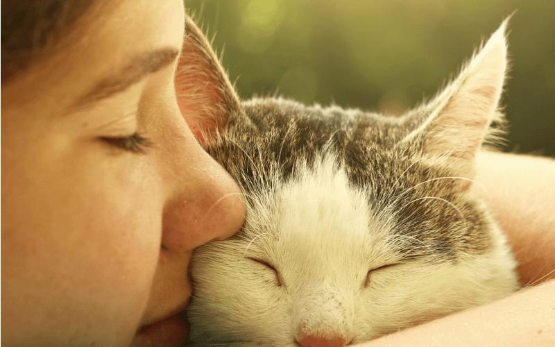 雑種の猫は無限大!種類や特徴、他の猫との違いを解説します雑種猫のは無限大!種類や特徴、他の猫との違いを解説します