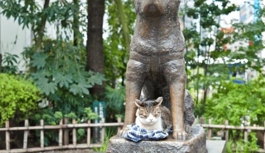 東京のおすすめ猫カフェが知りたい!おひとり様やデートでも楽しめる人気店10選