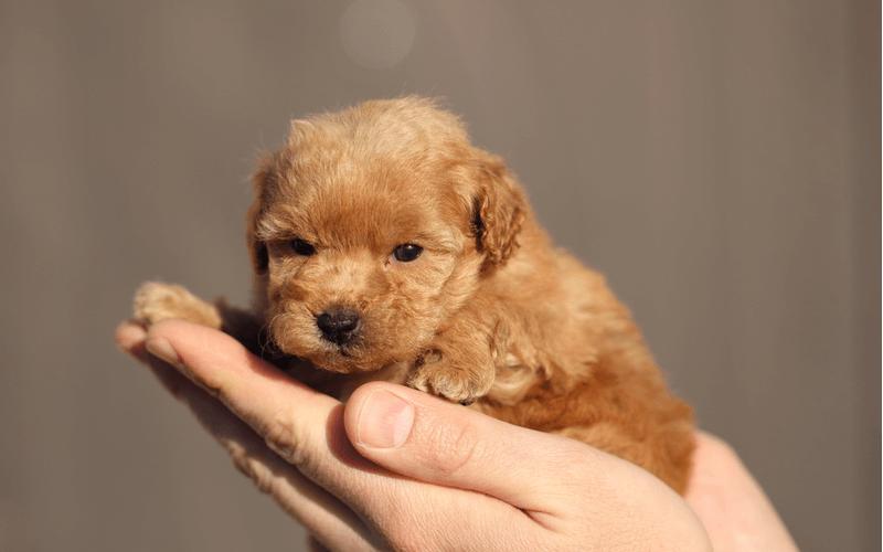 小型犬のドッグフードの特徴は?どんな商品が人気?