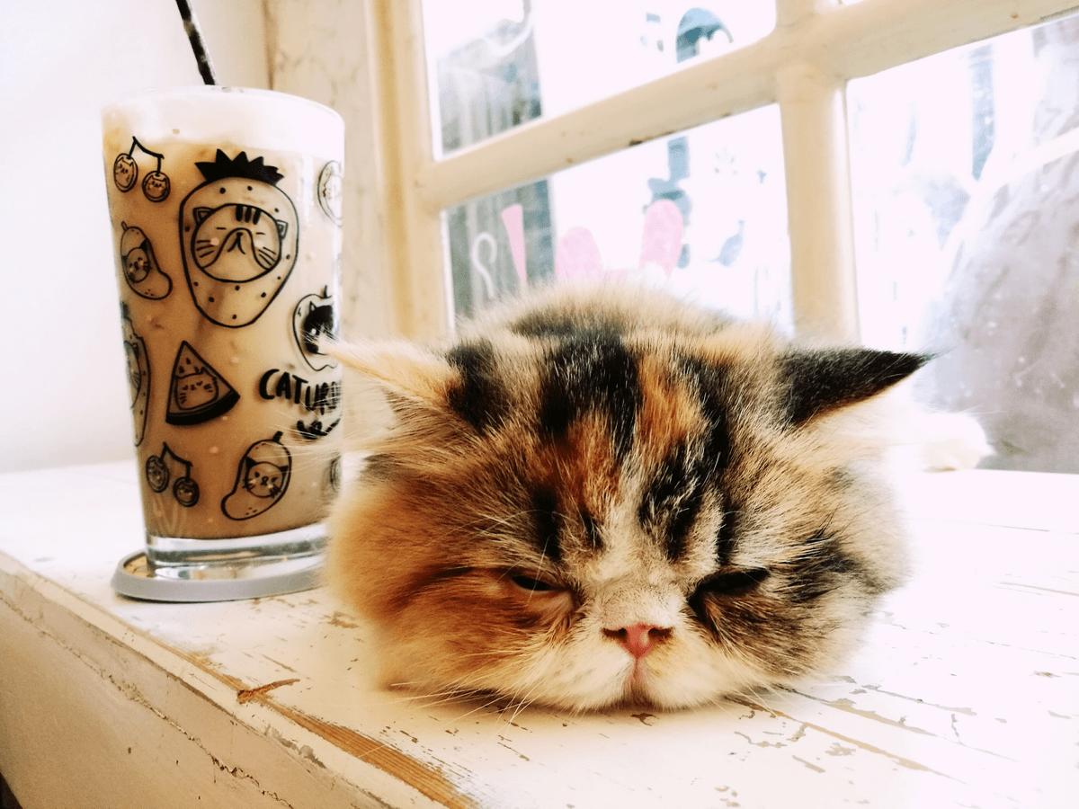 難波でおすすめの猫カフェ6選!可愛い猫たちに会いに行こう