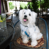 ドッグカフェに愛犬を連れて行くときの注意点4つ!犬を飼っていない人でも楽しめるお店もある?