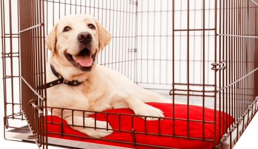 大型犬用ケージ(室内・移動用)おすすめ5選!簡単手作り方法も伝授