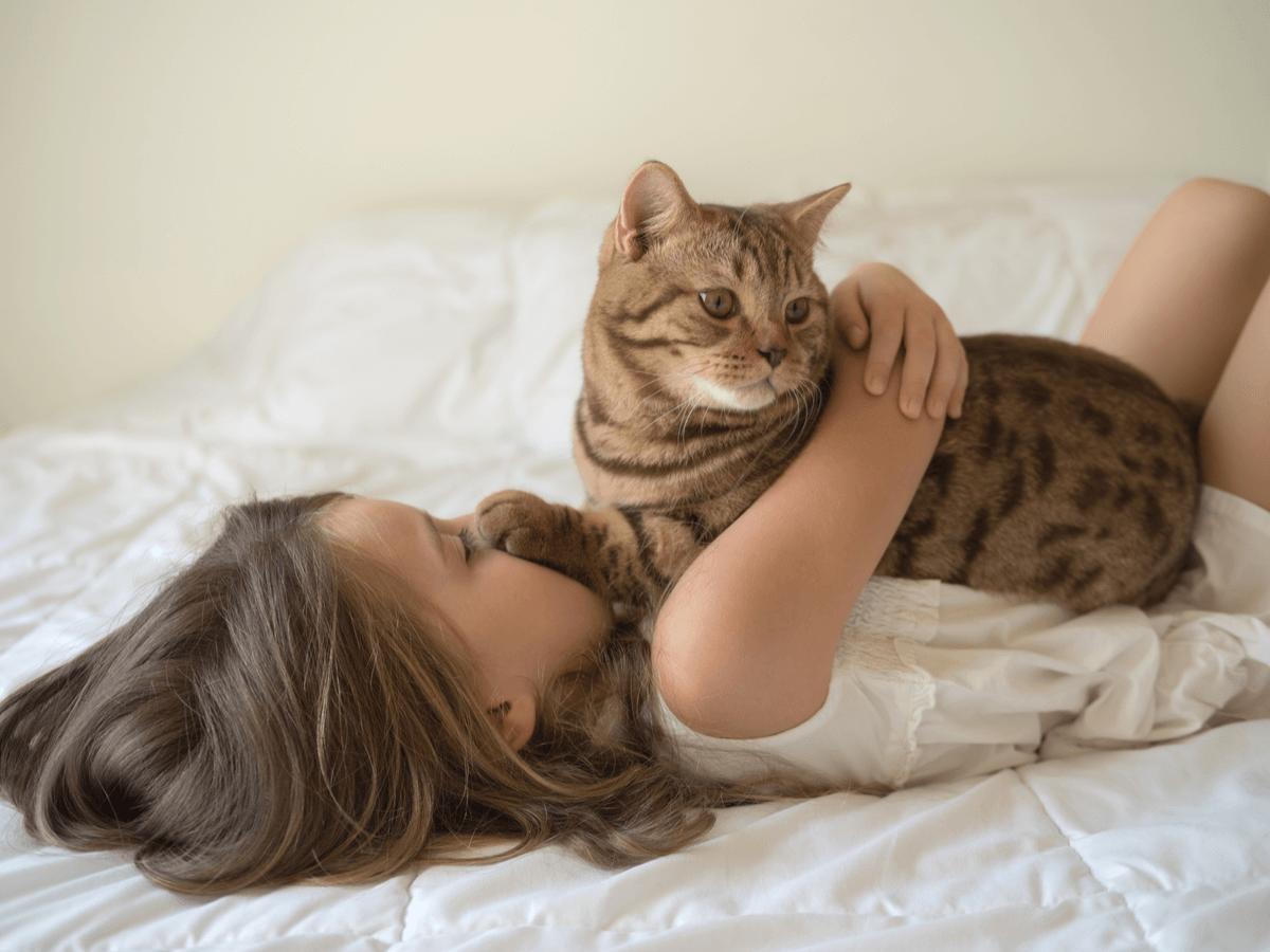 猫が布団に入ってくるかわいい理由3つ 猫と一緒に寝ないほうがいい理由5つ