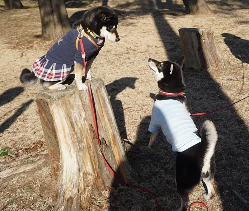 犬の兄弟探しをしている飼い主は意外と多い?!SNSを使って賢く探そう
