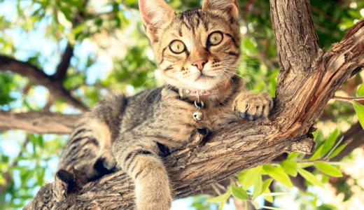 猫が骨折するのはなぜ?考えられる5つの原因と3つの対策法を徹底解説!