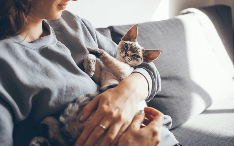 猫が骨折するのはなぜ?その原因と対策を徹底解説!