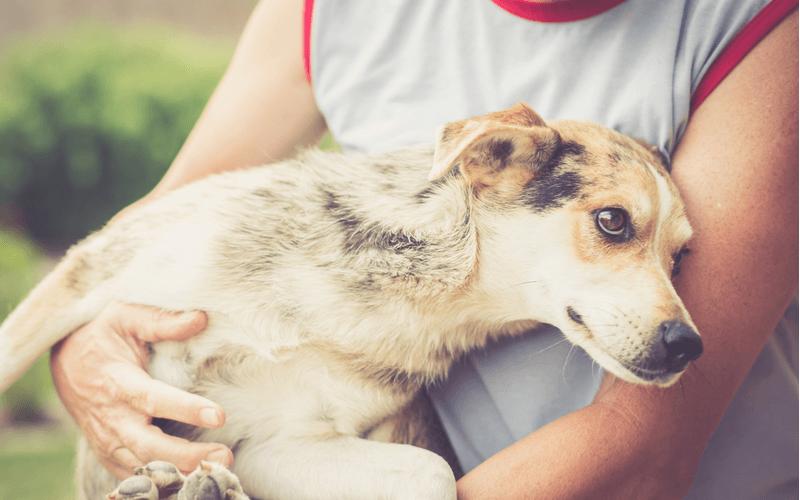 犬も夏バテをするの?その症状と対策について徹底解説!
