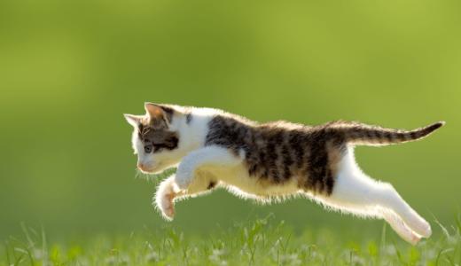 猫も脱臼する?考えられる4つの原因と事前にできる3つの予防策とは