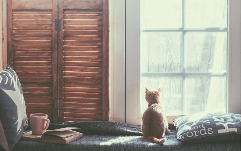猫も脱臼する?症状や原因を知って、早めに対処しよう