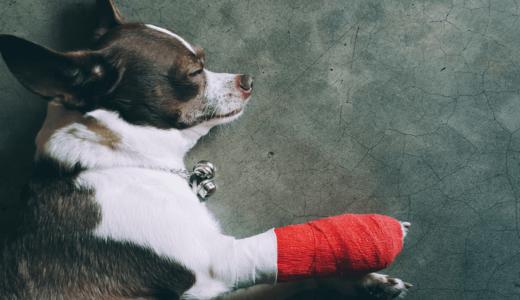 犬の擦り傷におすすめの薬3選!傷口を舐める理由と正しい消毒処置法