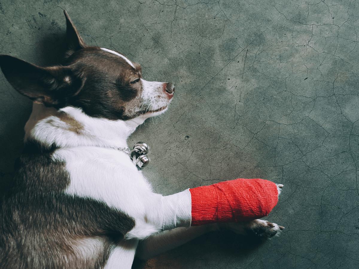 犬 擦り傷 痛い