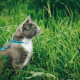 猫のリード・活用術3選