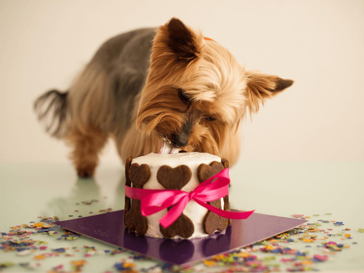 犬用ケーキ 通販