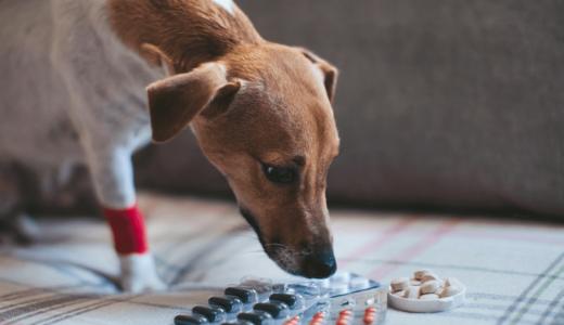 犬の口臭はサプリが効果あり?選ぶポイントとおすすめ商品8選とは