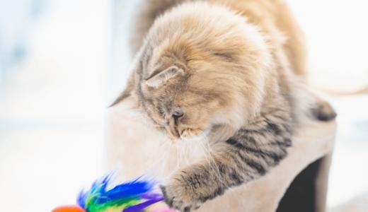 飼い猫の運動量は多い?少ない?その目安量と運動不足を解消する方法