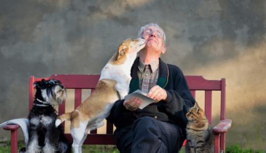 老犬介護の基本とは?後悔しないための心構えや重宝するアイテム5選