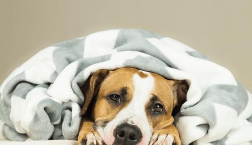 犬が吐く原因は胃が関係している?緊急事態になる前にしっかり対処しよう