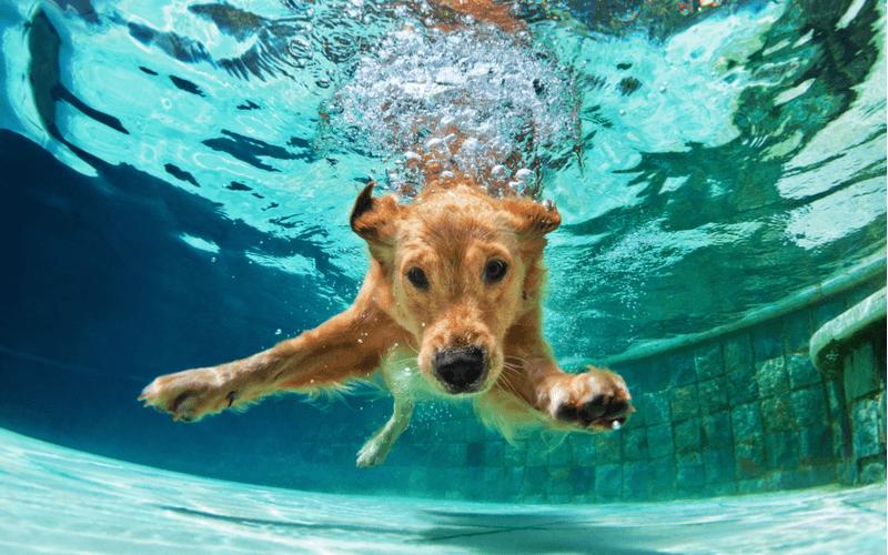 犬も入れる温泉ってあるの?全国にあるペット可の日帰り温泉施設を大公開!