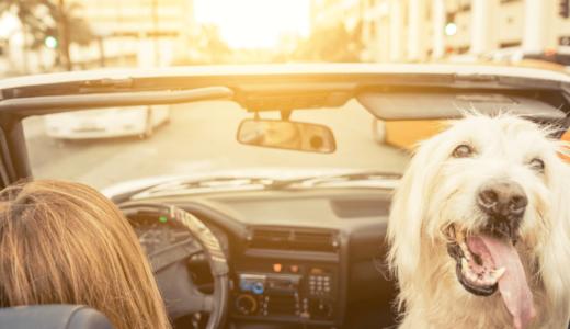 ペットと行けるおすすめの関西旅行とは?話題のスポットを含んだ18選をご紹介