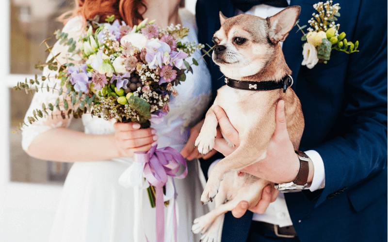 ペット 結婚式 東京
