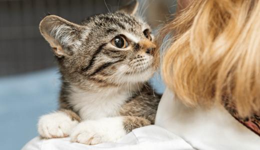 野良猫を保護したときの対処法と費用は?飼う場合は責任感と心構えを持つことが大切