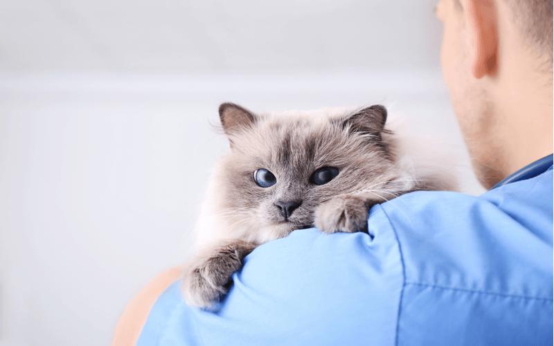 野良猫を保護したときの対処法と費用、飼うときに心構え