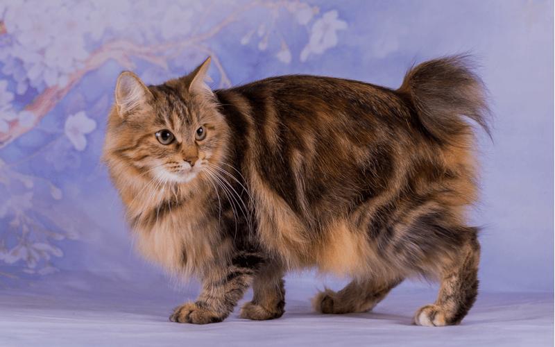 しっぽが短い猫について知りたい!種類や特徴を紹介
