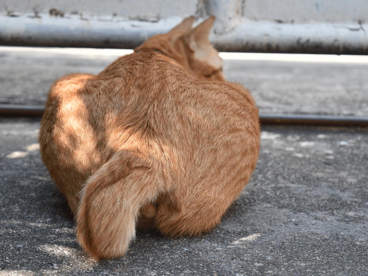 方 猫 尻尾 振り