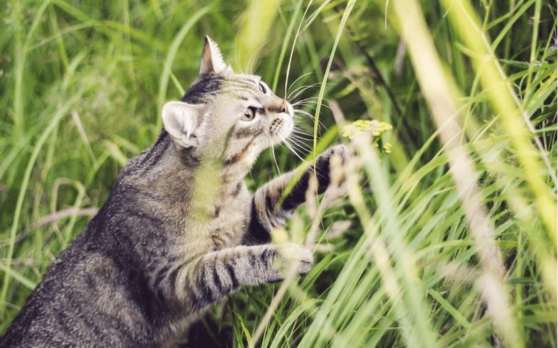 もっと上手に可愛く撮りたい!猫の写真の撮り方のコツ