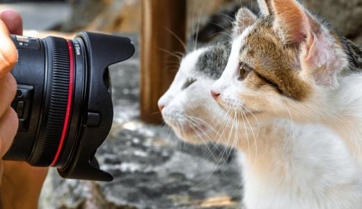猫の写真の撮り方6つのコツ!もっと上手に可愛く撮りたい人のための上級者テクや本・アプリ紹介も