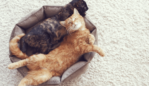 猫のマーキングはいつから?4つの防止法で臭いを消そう!