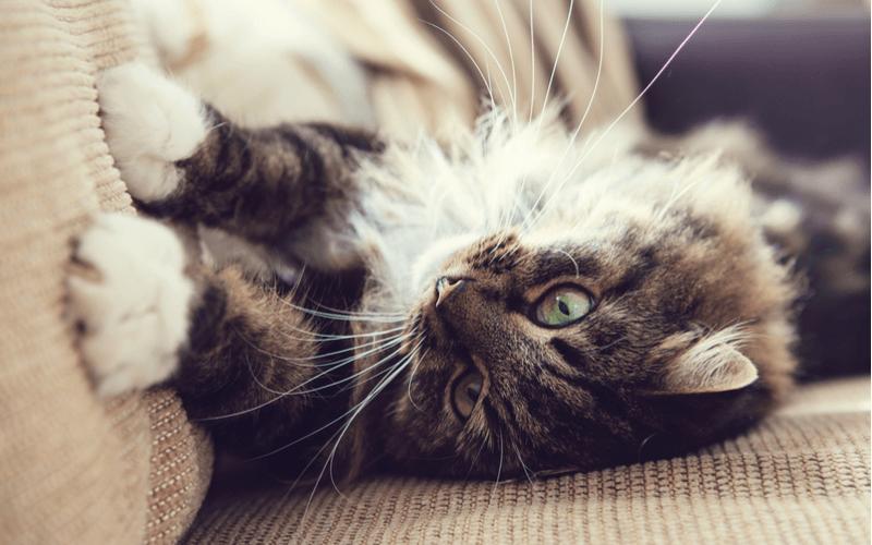 猫のマーキングで困っている飼い主さんへ マーキングの意味と対策を知っておこう