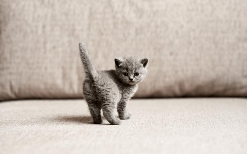 猫の人気の種類が知りたい!性格や特徴について解説