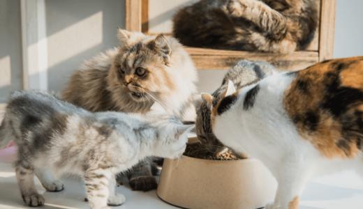 人気がある猫の種類が知りたい!12種それぞれの性格や各ボディーのタイプまで徹底解説